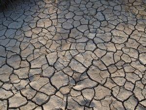 Ausgetrocknet: Hitze oft Hauptgrund für Aggressionen (Foto: pixelio.de, Johnnyb)