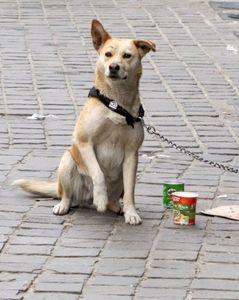 Hund: bringt eher mehr Spenden ein als Facebook (Foto: pixelio.de/Rolf Handke)