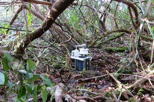 Forscher nehmen Feuchtigkeitsmessung im Regenwald vor (Foto: web.mit.edu)