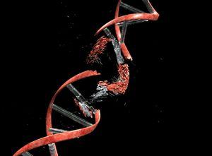 Gefährliche Zerstörung einer Genkopie (Illustration: kuleuven.be/kuleuven)