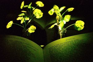 Brunnenkresse mit leuchtenden Blättern zum Lesen von Büchern (Foto: web.mit.edu)