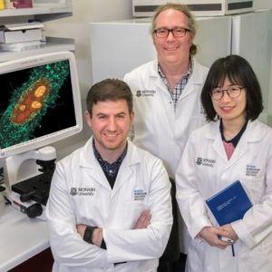 Gregory Moseley (Mitte) und sein Team im Labor (Foto: monash.edu)