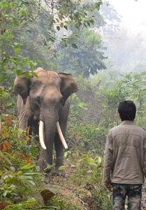Myanmar: Elefanten helfen bei der Holzarbeit (Foto: izw-berlin.de)