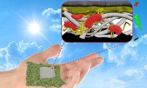 So könnte es in der Papierbatterie aussehen (Grafik: Seokheun Choi)
