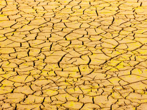 Ausgetrockneter Boden: Da geht der Mais ein (Foto: Versonnen, pixelio.de)