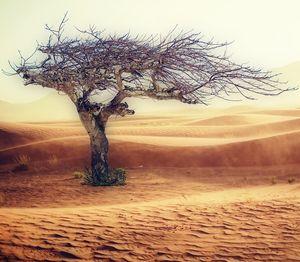 Baum in Wüste: Migration durch Klimawandel (Foto: pixabay.com, cocoparisienne)