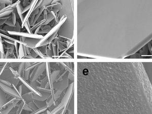 Beschichtete und unbeschichtete Vanadiumdisulfid-Teilchen (Foto: news.rpi.edu)