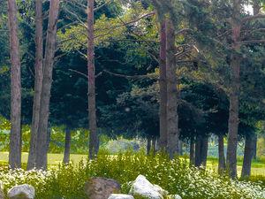 Gut fürs Klima: Baum-Anpflanzungen bei neuen Wohnanlagen (© Karl Grabbe)
