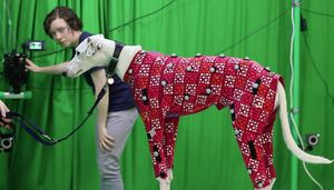 Motion Capture: Hunde lassen sich günstig digital vermessen (Foto: bath.ac.uk)