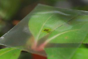 Flexibel: Mikrowellenverstärker auf Holzbasis (Foto: wisc.edu, Huilong Zhang)