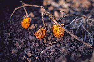 Verbrannte Erde: Illegale Rodung ist gängig (Foto: alissontiago85, pixabay.com)