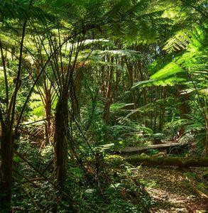 Regenwald: weniger Niederschlag durch Abholzung (Foto: pixabay.com, pattyjansen)