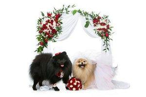 Tierisches Hochzeitspärchen