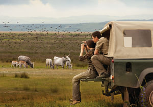 Seewinkel Safaris